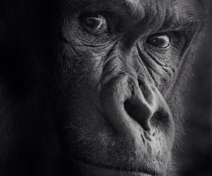 animal, monkey, and power image
