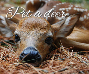 cute, animal, and deer image