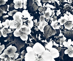 pretty and flowers black and white image