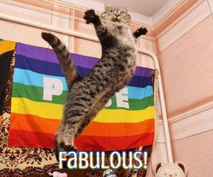funny, cat, and fabulous image