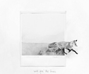 foxes, music, and Taylor Swift image