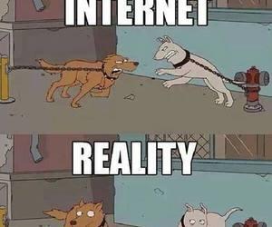 animal, funny, and dog image