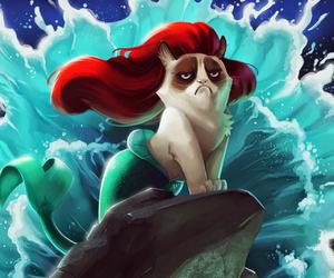 grumpy cat, cat, and funny image