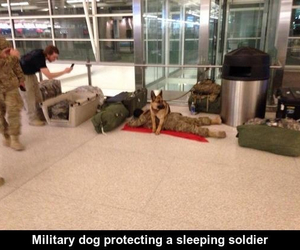 army, aww, and protect image