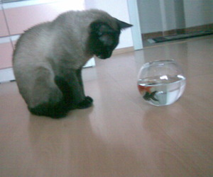 cat and fishes image