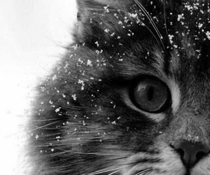 cats, black and white, and cat image
