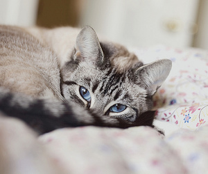 animals, kittens, and beauty image