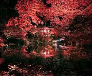 japan, kyoto, and light image