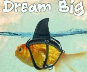 Dream, fish, and shark image