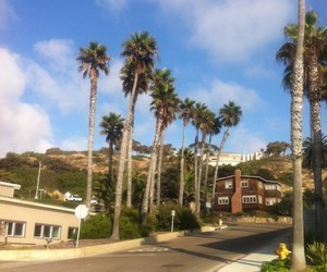 sd, trees, and beach image