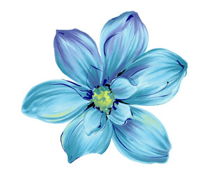 blue and flower image