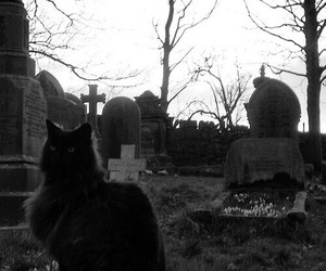 cat, gothic, and black image