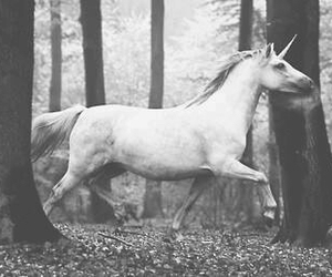 unicorn, forest, and black and white image