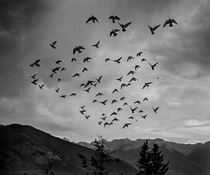 birds, freedom, and photography image