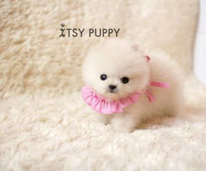 dog, white, and pink image