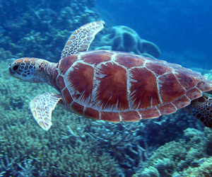 turtle and ocean image