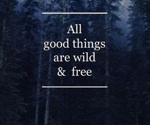 free, quote, and wild image