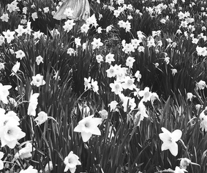 black and white, flowers, and girl image
