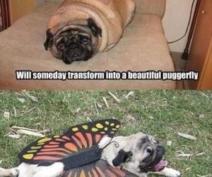 funny, pug, and dog image