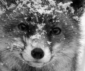 animal, fox, and snow image