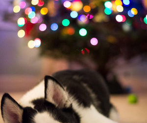 animal, animals, and christmas image