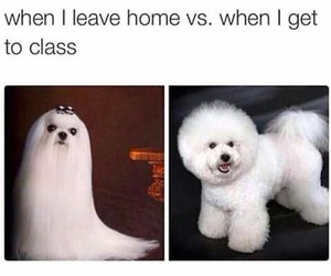 annoying, dog, and school image