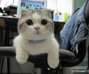 cute kitten image