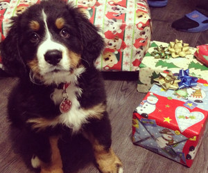 puppy and christmas image