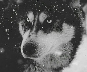 animal, eyes, and snow image