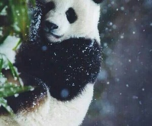 animals, snow, and sweet image