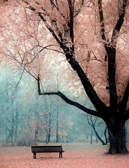 amazing, nature, and photo image