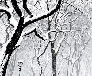 snow, winter, and tree image
