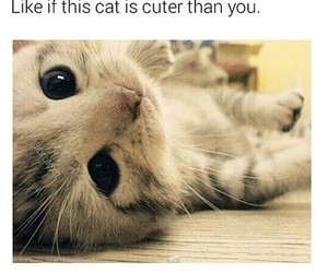 adorable, cat, and pet image