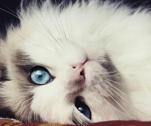 cat, amazing, and eyes image