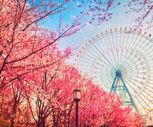 cherry blossom, japan, and cute image
