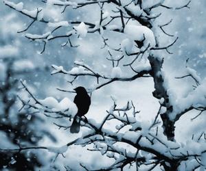 snow, bird, and winter image