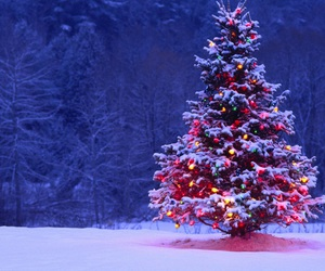 christmas tree, invierno, and wow image