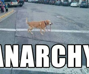 alone, anarchy, and doggy image