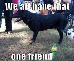 funny, friends, and dog image