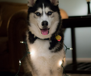 beautiful, blue, and christmas image