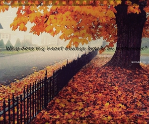 autumn, broken, and broken hearted image