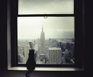 cat, new york, and window image