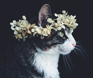 beauty, cat, and crown image