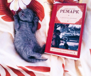 animal, book, and relax image