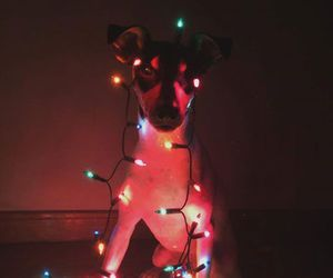 christmas, dog, and lol image