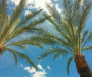 palm trees, vegas, and good photography image
