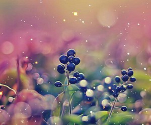 berries, food, and wonderful image