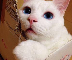 animal, blue eyes, and kitten image