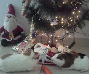 guinea pig, cobaya, and porquinho da india image