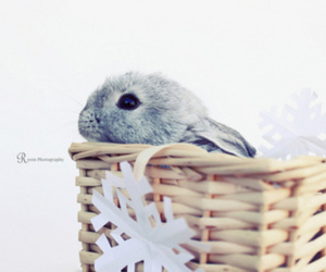 lluly and rabbit' image